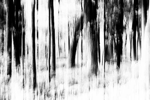 Tree Abstract in Black and White by Angie Tirado