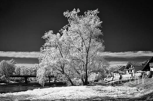 Tree Along the River Krka by Norman Gabitzsch