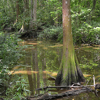 Tree and reflections in swamp by Maggy Marsh