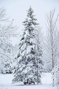 Tree and Snow by Alana Ranney