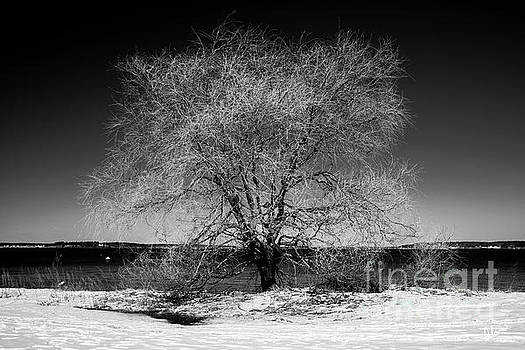 Tree at Oceans Edge by Alana Ranney