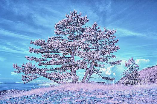 Tree at Vratnik Pass by Norman Gabitzsch