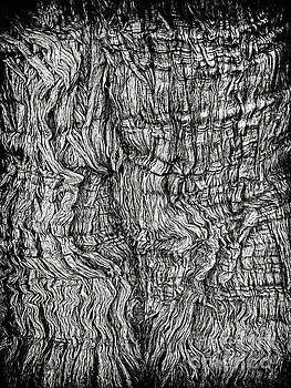 Tree Bark in Black and White by Norman Gabitzsch