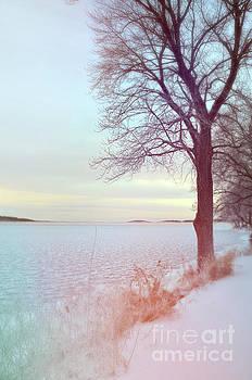 Tree by an Icy Lake by Jill Battaglia