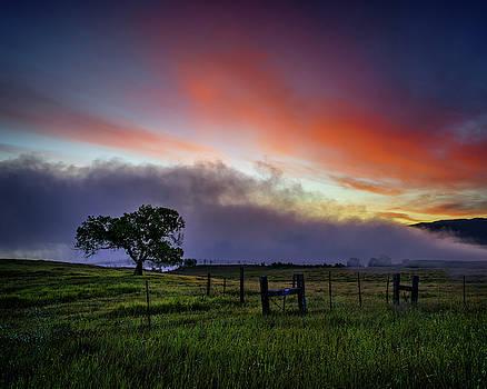 Cottonwood Tree At Sunrise by Nazeem Sheik