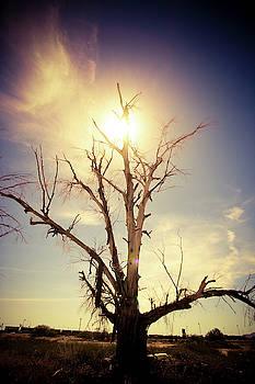 Tree by Cyndi Hardy