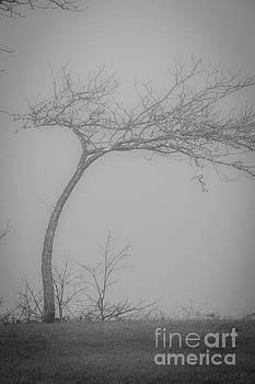 Tree In A Fog by Sharon Mayhak