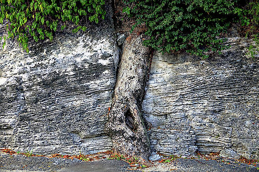 Tree in Stone by Rick Lawler