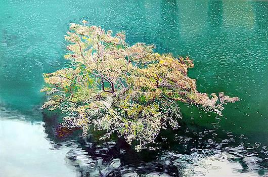 Tree in the Lake by Robert Keseru