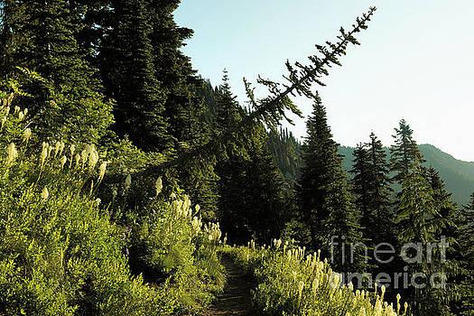 Tree leaning across a trail  by Jeff Swan