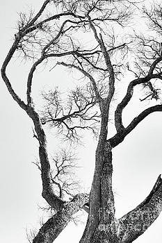 Tree Limbs In Black and White by Tom Gari Gallery-Three-Photography