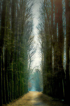 Tree-lined avenue in the park by Roberto Pagani