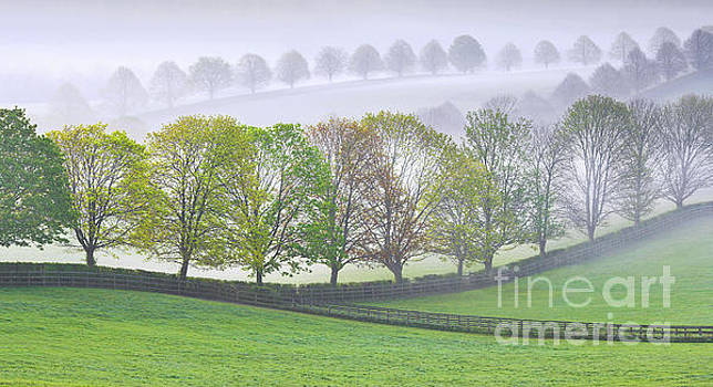 Tree-lined landscape by Colin Roberts