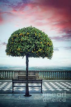 Tree Of Beauty by Evelina Kremsdorf