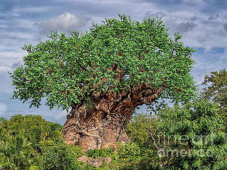 Dale Powell - Tree of Life - Disney World in Orlando Florida