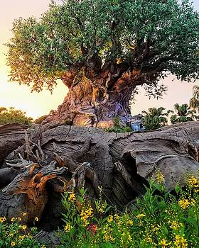 Tree of Life by Michael Hills