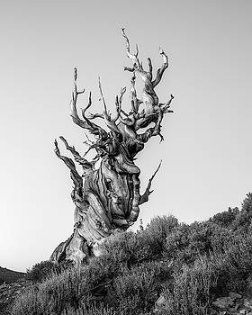 Tree of pain by Davorin Mance