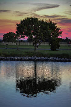 Tree - Reflection by Michael Hills