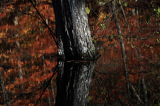 Tree Reflects In The Pond by Karol Livote