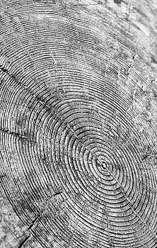 Tree Rings Black and White by Jackson Ball