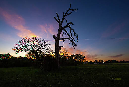 Tree Silhouette at Sunrise 1 by Debby Richards