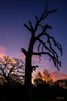 Tree Silhouette at Sunrise 2  by Debby Richards