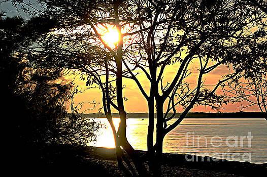 Tree Silhouette At Sunset  by Judy Palkimas