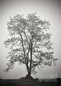 Cindy Treger - Tree Silhouetted Against Fog