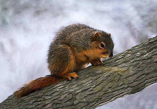 Tree Squirrel Illinois Winter by Mary Lynn Giacomini