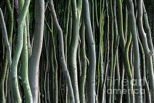 Arterra Picture Library - Tree Trunks