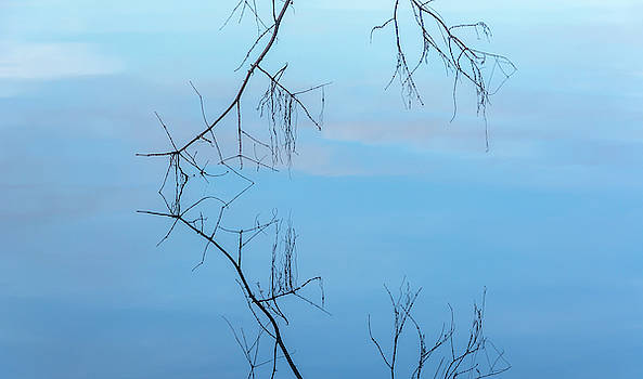 Tree Twigs and Reflections at Green Lake by Marv Vandehey