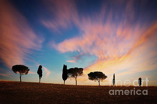 Trees at sunset in Tuscany by Delphimages Photo Creations