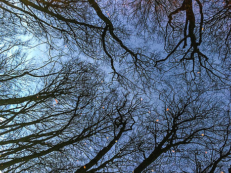 Trees, Branches And Leaves Reflected In The Water Canal Winter D by Kim Vermaat