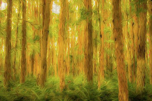 Trees in Swamp by Jeffrey Klug