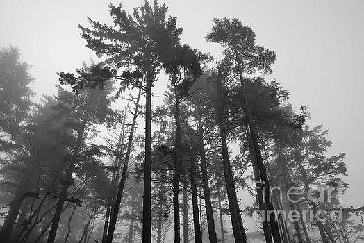 Trees in the Mist by Jeni Gray