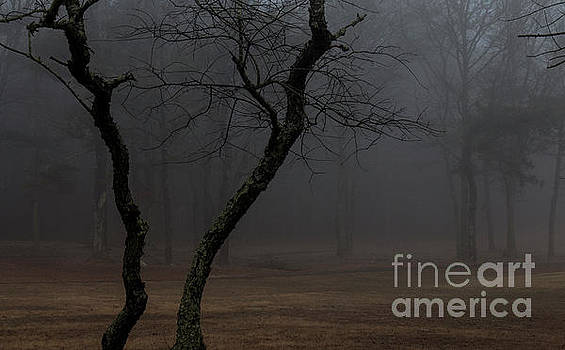 Trees In The Morning Mist by Sharon Mayhak