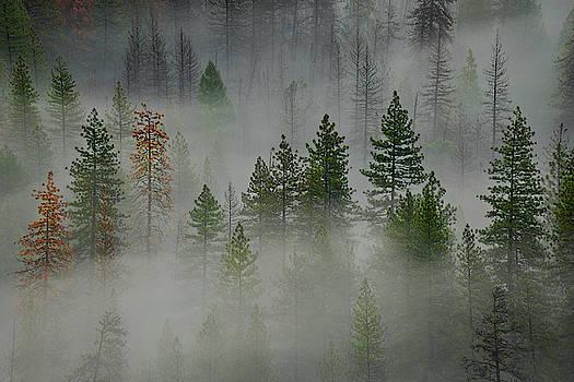 Jon Glaser - Trees in Yosemite