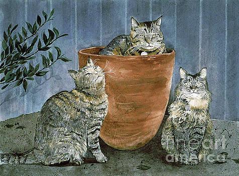 Tres Gatos by Monte Toon