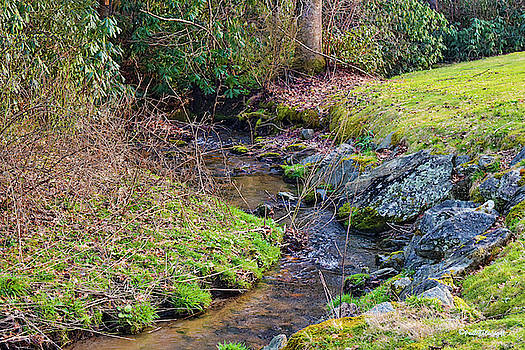 Trickling Stream by Paulette B Wright