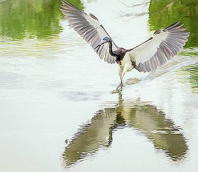 Tricolored Heron Angel Wings Photopainting by Debra Martz