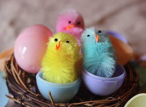 Cathy Lindsey - Trio Of Easter Chicks