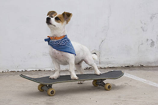 Cool Pup by Nikki Attree