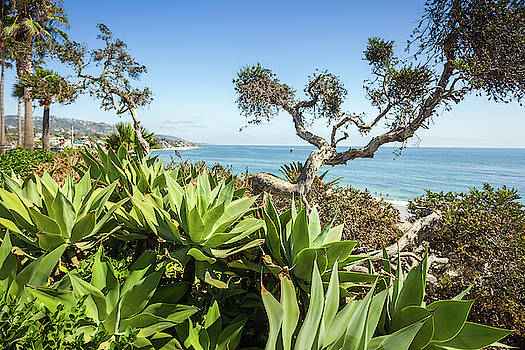 Tropical flora with palms and succulents in Heisler Park of Lagu by Natalia Macheda