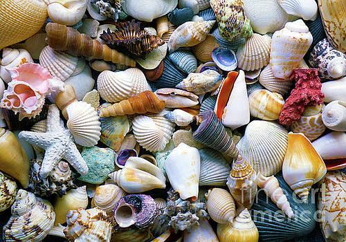 Tropical Treasure Seashells A91218 by Mas Art Studio