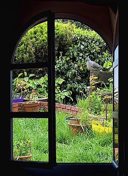 Trough the window by Tatiana Travelways