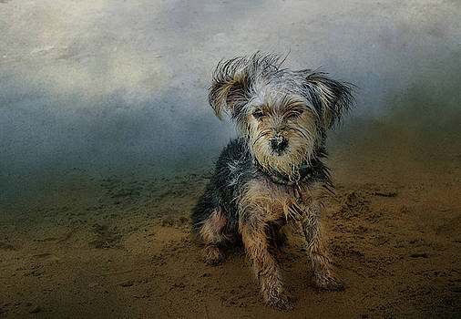 Barbara Manis - Tucker on the Beach