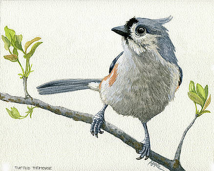 Tufted Titmouse Original Watercolor Painting by Linda Apple