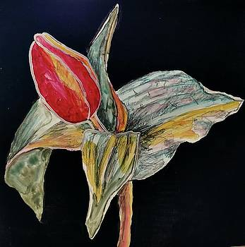 Tulip 1 by Beverly Harrison