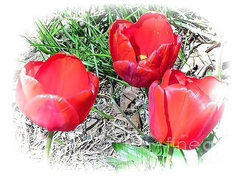 Tulip 20 by JudithAnne Monahan