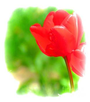 Tulip 21 by JudithAnne Monahan